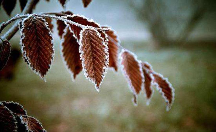 今日霜降:秋天已逝,冬季将至