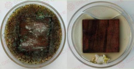 竹木材发霉怎么办?预防竹木材发霉的防霉措施