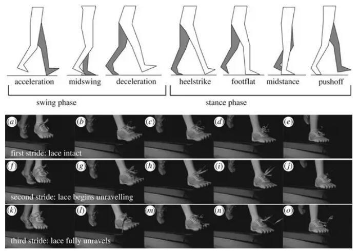 红松带您了解鞋带为什么经常会自动松开?