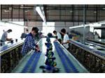 制鞋大厂呈现幅度增长,明年的订单已被预订!