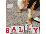 【广州弘峰,专注橡胶和PU大底】BALLY | 2021春夏女鞋订货会分析